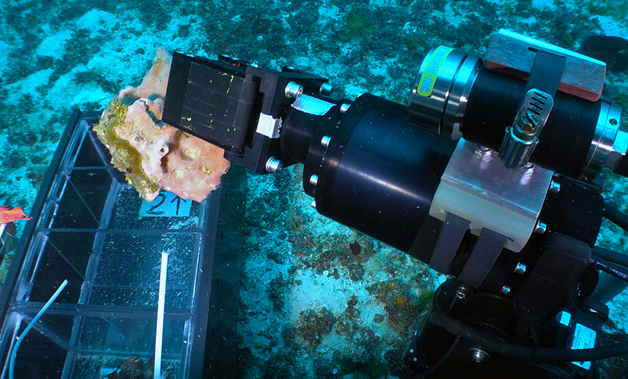 An FAU Harbor Branch Oceanographic Institute tool sled handles a piece of coral