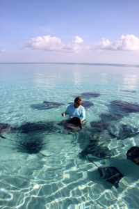 Common to tropical and subtropical waters, stingrays can be quite docile, curious and friendly.